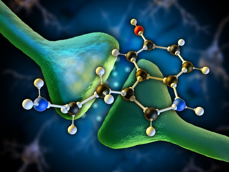 Serotonin – The Brain Gut Connection